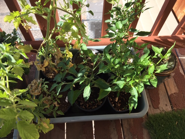 plants for raised bed