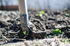 shoveling dirt in garden