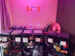 Indoor seedling garden